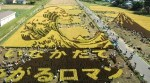 rice_art_harvest_3